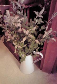 葉っぱをつまむと、いい香りが…♪