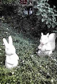ジャンクな庭に、かわいい子が仲間入り!!