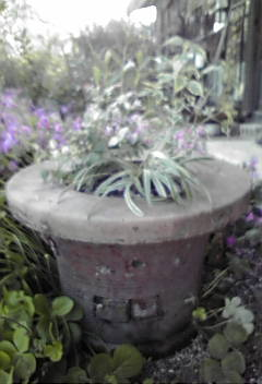 火鉢に寄せ植えしてみました!