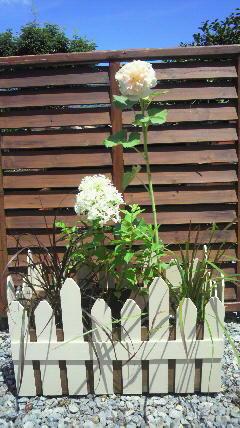 ミニ・花壇♪