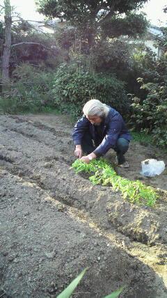 野菜作りに挑戦…!!