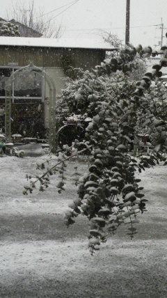 雪の重みで…?