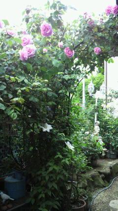 素敵なお庭…♪