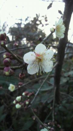 花だより(1<br />  )
