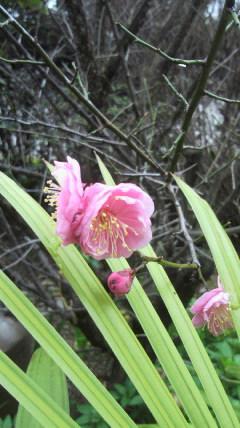 花だより(2<br />  )
