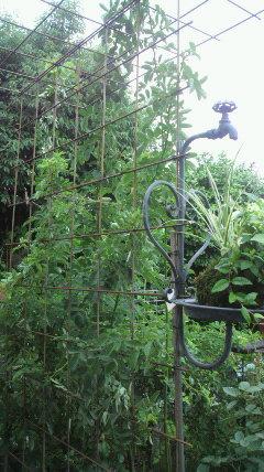 西の庭への入口に…