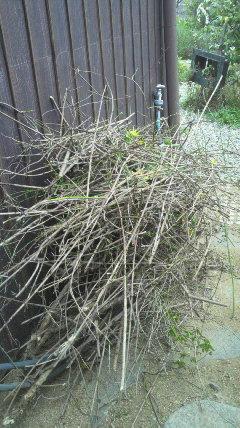古い枝を…
