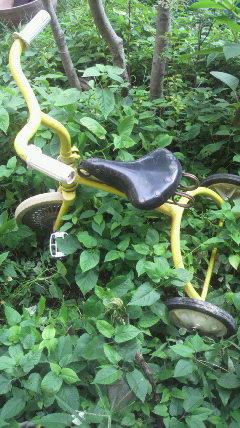 黄色い三輪車♪