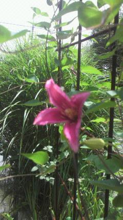 二度目の花が…