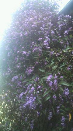 白と紫の…