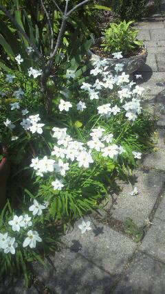 花盛りの…